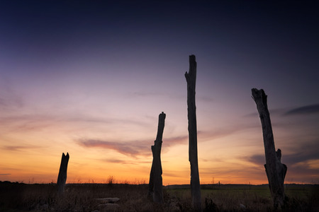 silhoutted: Sunset skies and deadwood timber tree trunks silhoutted in the rural countryside landscape. Penrith Australia