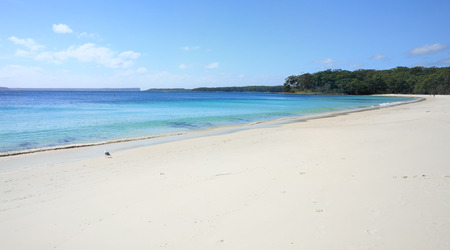 sea gull: Beautiful idyllic holiday or getaway.   Greenfields Beach, Jervis Bay Australia