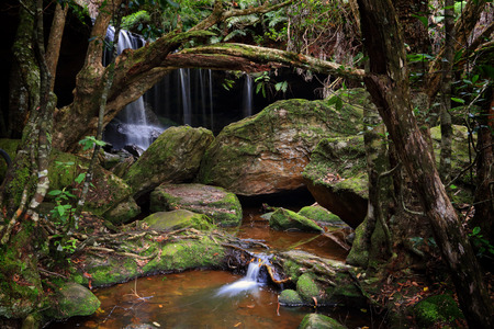 bushwalk: The Grotto falls at Fitzroy Falls within Morton National Park, the largest in NSW.  A bushwalk to the Grotto, a tranquil area with lush undergrowth, moss covered rocks and the sounds of nature