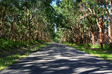 dappled: Enchanting drive through dappled light through a forest of red gums and lush green ferns in Mungo Brush National Park