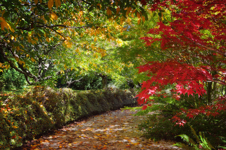 vibrant colours: Autumn pathway filled with vibrant colours and dappled filtered sunlight through the colourful leaves. Stock Photo