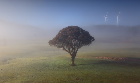nsw: Rolling hills with morning fog a lonely tree stands wrapped in its winter cloak and kissed by its languid cool mist, and on undulating hills in the distance the wind tubines quietly turn.  Carcoar NSW Australia Stock Photo