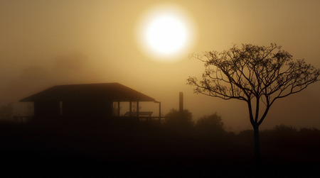obscured: Heavy foggy morning sunrise in Central West NSW.  The thick fog obscured and reduced visibility to just a few metres but created a pretty soft dispersion of the sunlight through the fog and creating mysterious silhouettes.
