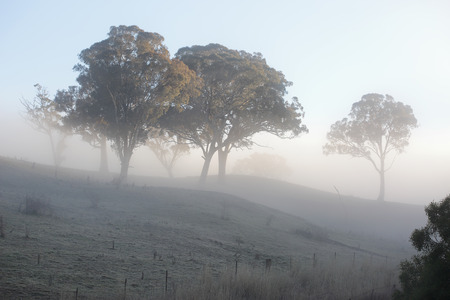 crunch: A crisp winters morning and a thick blanket of fog mutes the scene while fog frost crystals  across the rural landscape crunch underfoot... awaiting the fire of the winter sunbeam to melt