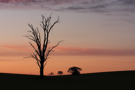 farmlands: Dawn skies over rural farmlands with silhouette of an old dead tree in foreground