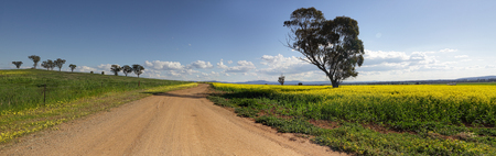 travelled: Driving along the roads less travelled in Canowindra.  Farmer Ross farmlands in mid afternoon light.  3 shot panorama