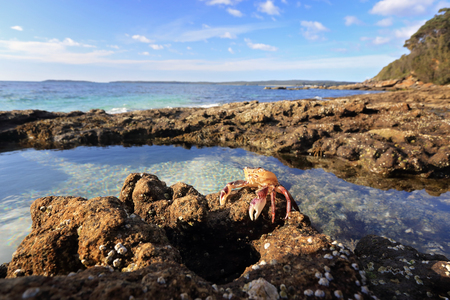 crustaceans: A sparkling bath of beauty with shell encrusted walls is the sea rockpool and what lies within a small enchanted world of crabs and fish and other crustaceans basquing in tranquility.