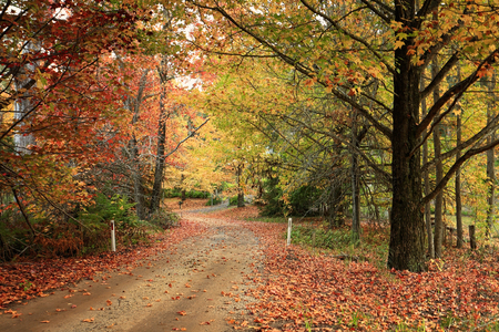 autumn colour: Country road meandering through trees in full Autumn colour of foliage.  Shades of lime green, golden yellow, orange and rusty reds. Stock Photo