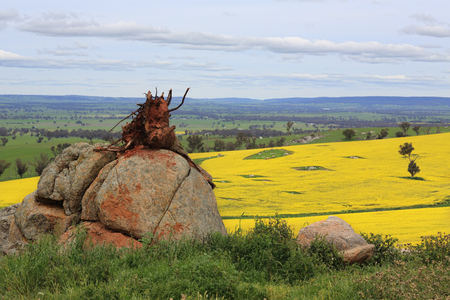 A tree stump balancing on a large boulder and in the distance, fields of canola and grazing pastures and farm buildings.  Focus to foreground only Stock Photo