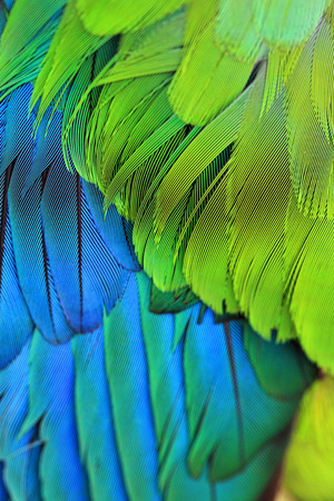 Closeup of a birds colourful plumage feathers Stock Photo