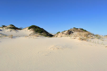 footprints in sand: Sand dunes and dune vegetation under a clear blue sky Stock Photo