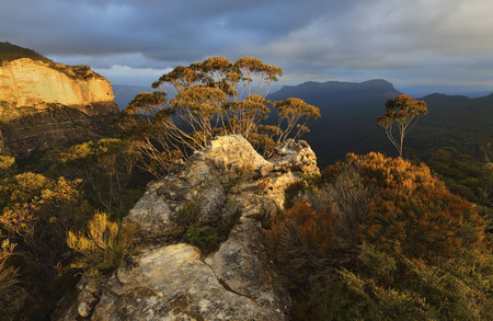 bushwalk: Warm golden sunlight across the rocky escarpment texture and colour in the native bushes and gum trees.  Blue Mountains views to Mount Solitary under a moody sky