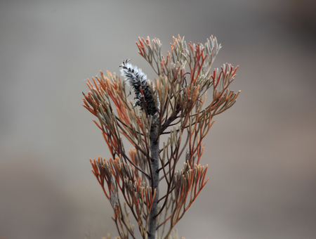 A plant regenerates after a summer bushfire in Australia