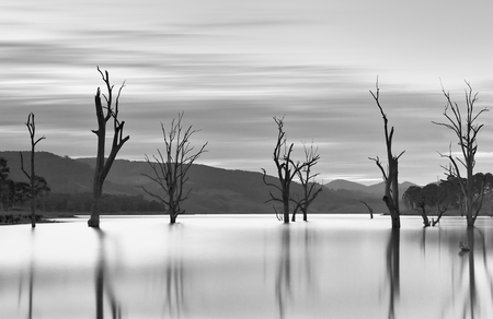 Steadfast trees stand in waters teaming with jumping fish.  Long exposure shows the movement of the clouds and stills the waters. Stock Photo