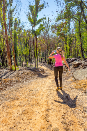 Hiking through trees regenerating after bush fire,their blackened trunks bursting with fresh new growth backlit by the sun but its very dry and we fear there will be more bushfires this season. Banque d'images