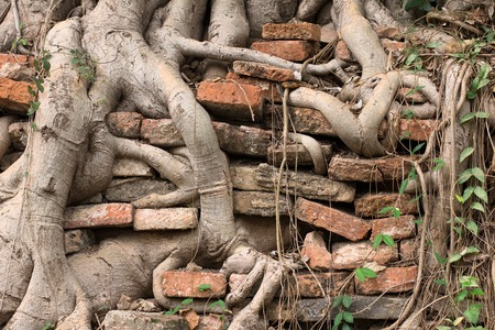 burrow: Roots of a tree burrow in ancient bricked wall. As time goes by, the roots ruin the wall into bricks. Stock Photo