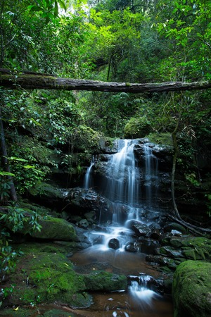 soi: Phu Soi Dao National Park located in the north of Thailand, consists of fresh forest and is the source of streams. One of its attractions Saithip, a small 7-step waterfall that is damp and covered by green moss.