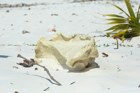 A piece of PS foam fell off a boat into the sea, and later was swashed to inner beach during the flood tide. The foam is a synthetic material that takes decades to decompose.