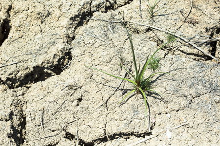 Local grass grows regulary in a dry field. But the grass may not survive through this season, because of severe drought that caused by climate changes.
