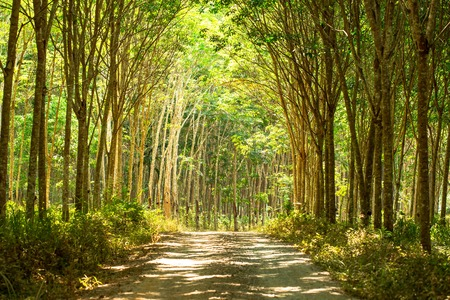 About 90 percent of the world's field latex production, is from South East Asia. Farmers in south of Thailand, cut a path through rubber plantation. This gravel road connects the rubber plantation to elsewhere.