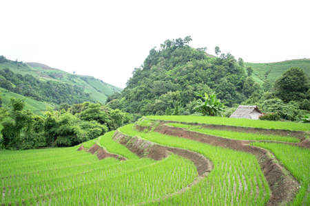 Rice terraces were built on the area between mountains with minimal equipment. They are fed by an irrigation system from the rainforests above. Corns and vegetables are also planted on the terraces.