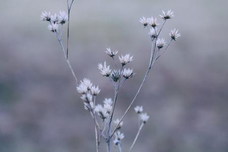 섬세한 흰색 꽃