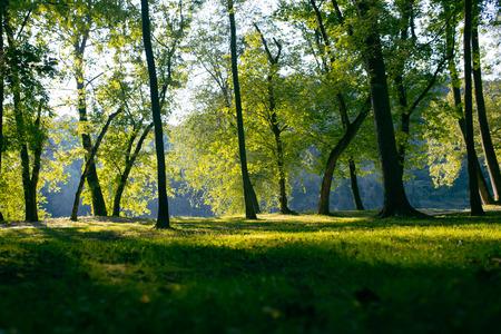 木の日陰のフィールド 写真素材