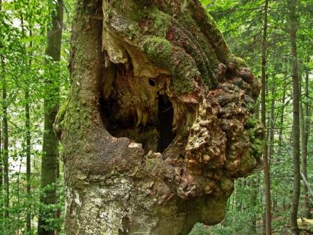 Hollow tree Stock Photo