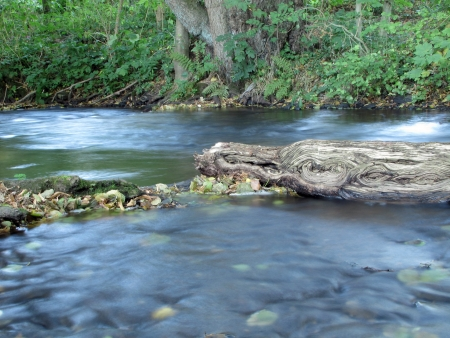 Old tree trunk in the creek