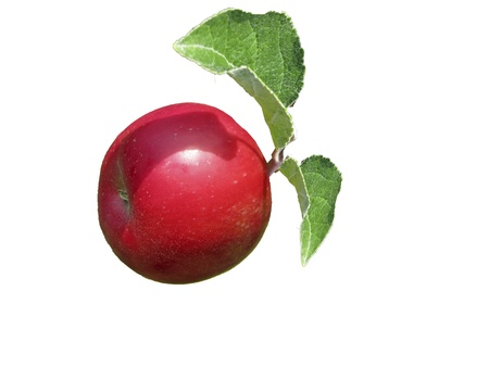 Apple with leaves in front of white background