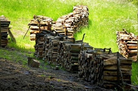 Wood stack in a meadow