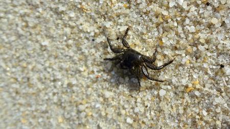 crustaceans: Crab at the Beach