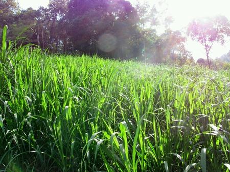 background: Green Grass Hillside Hill Nature Stock Photo