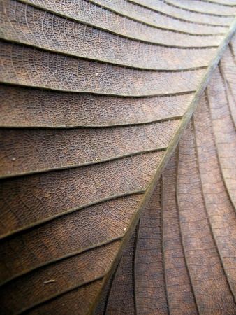 up: Close Up Dry Leaf Texture Stock Photo