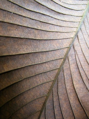 close: Close Up Dry Leaf Texture Stock Photo