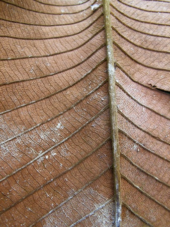 texture: Close Up Dry Leaf Texture Stock Photo