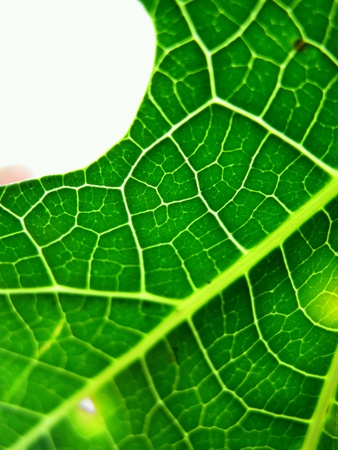 abstract: Abstract Closeup Leaf Stock Photo