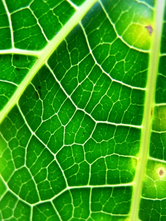 abstract: Abstract Closeup  Leaf