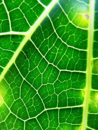 closeup: Abstract Closeup  Leaf