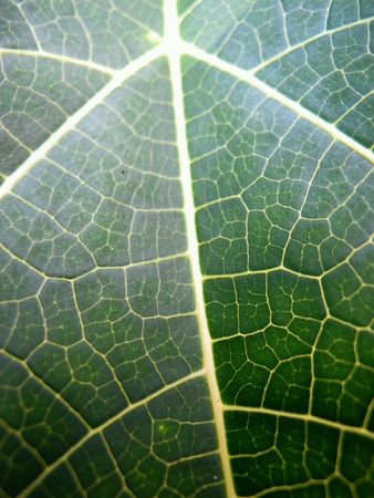 closeup: Abstract Closeup Connection Leaf