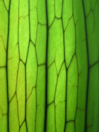 up: Close Up of Staghorn Fern Leaf Texture Stock Photo