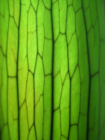 staghorn: Close Up of Staghorn Fern Leaf Texture Stock Photo
