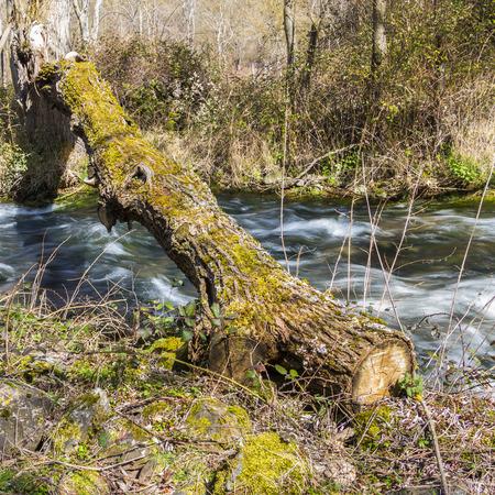 Fallen tree as improvised bridge photo