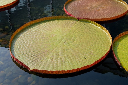 floaters: A photo of the giant victoria water platter