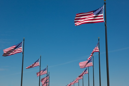 This is a photo of many American Flags blowing in the wind.