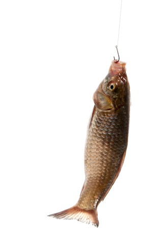 Fish on the hook on a white background Stock Photo