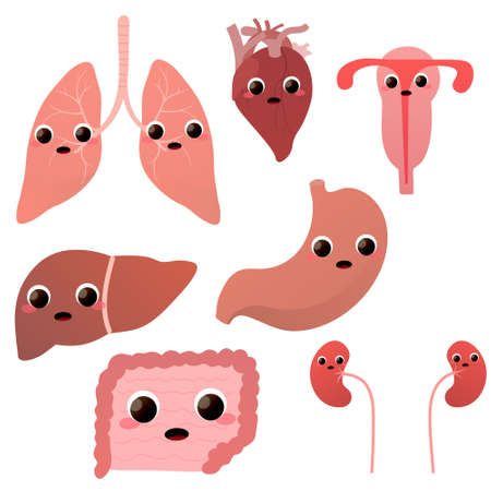 Set of cute anatomical mascot for surgery or medcine - lungs, heart, liver, stomach, internal organs of human Illusztráció
