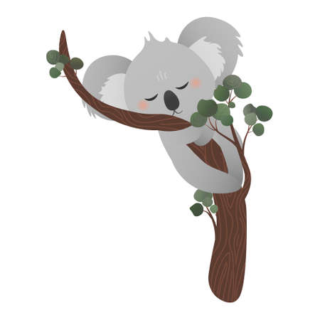 Cute koala bear sleeping on eucalyptus tree while hugging tree in cartoon style on white background, vector stiker for kids, childish animal character