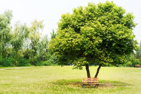 under a tree: Broken bench under a tree Stock Photo