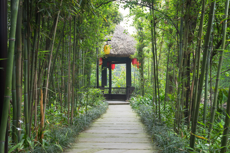 Chinese pavilion in a bamboo forest, Meishan, China